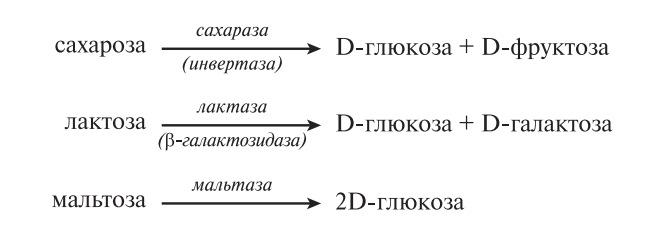 Гидролиз пищевых дисахаридов