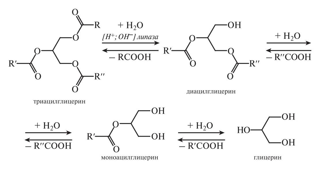 Гидролиз триацилглицеринов