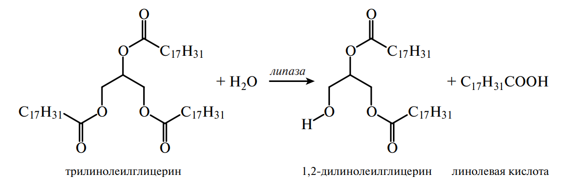 гидролиз жира ферментом липазой
