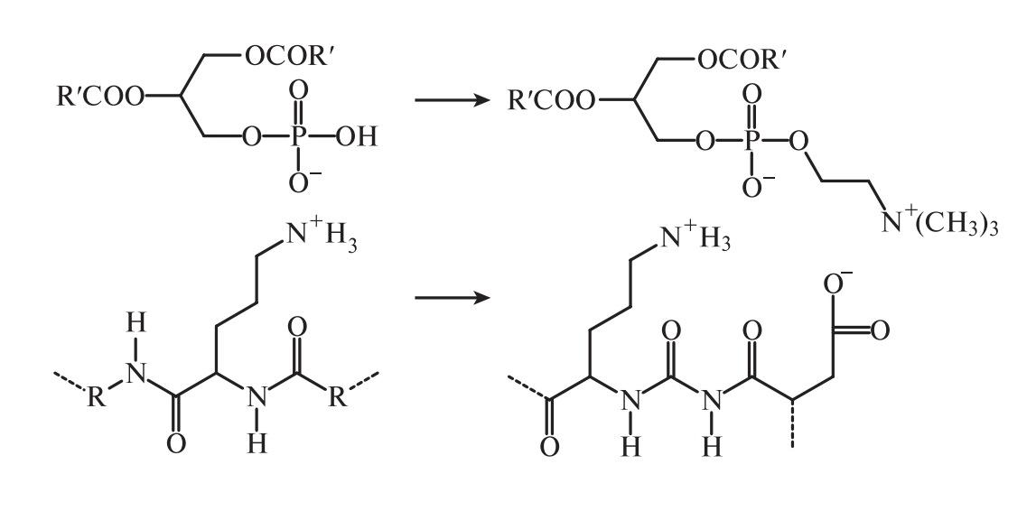 глицерофосфолипиды–белки