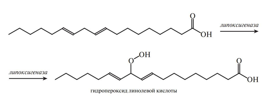 линолевая кислота окисляется при участии фермента липоксигеназы