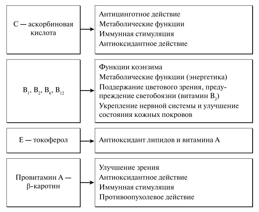 Области физиологического воздействия витаминов и антиоксидантов