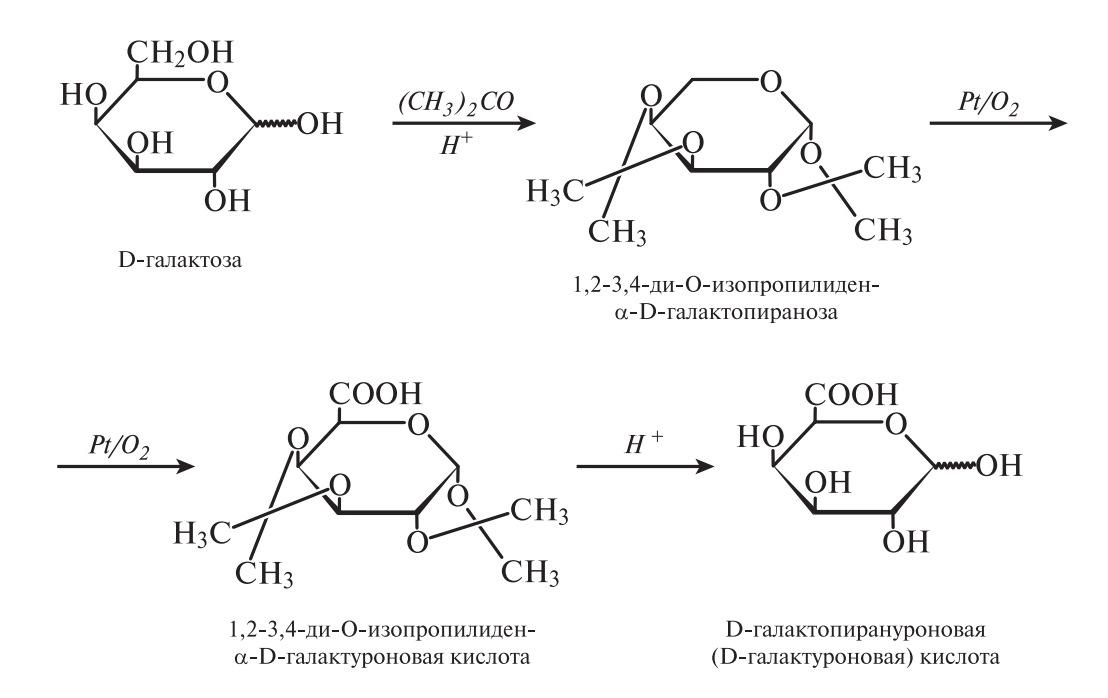 Окисление D-галактозы в D-галактуроновую кислоту