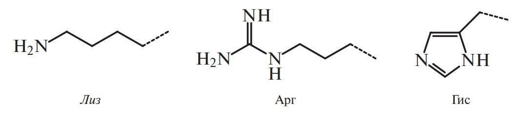 Полярные аминокислоты