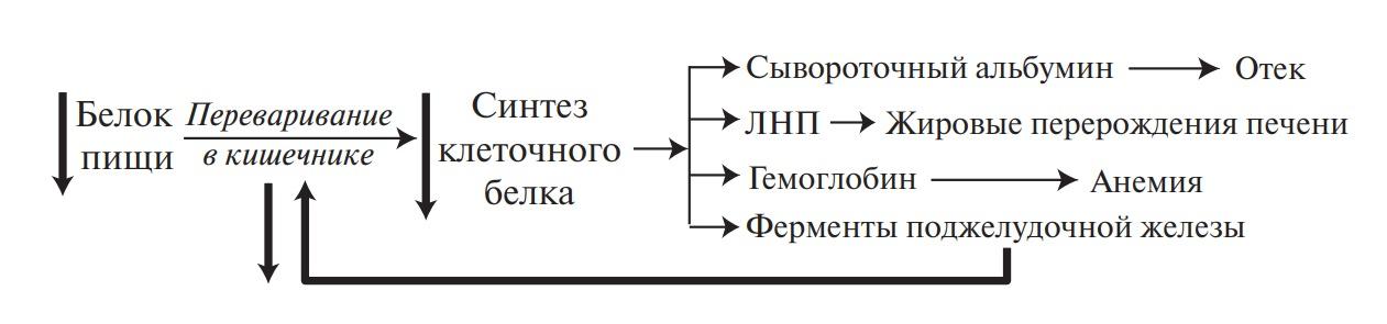 Порочный круг при квашиоркоре