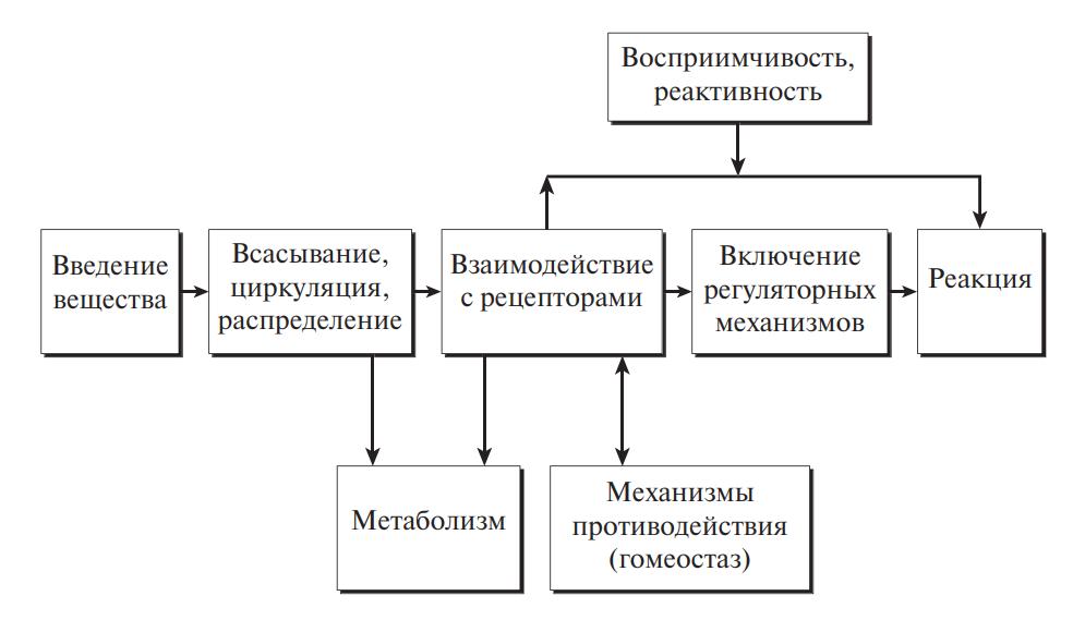 Путь и воздействие ксенобиотика в организме человека