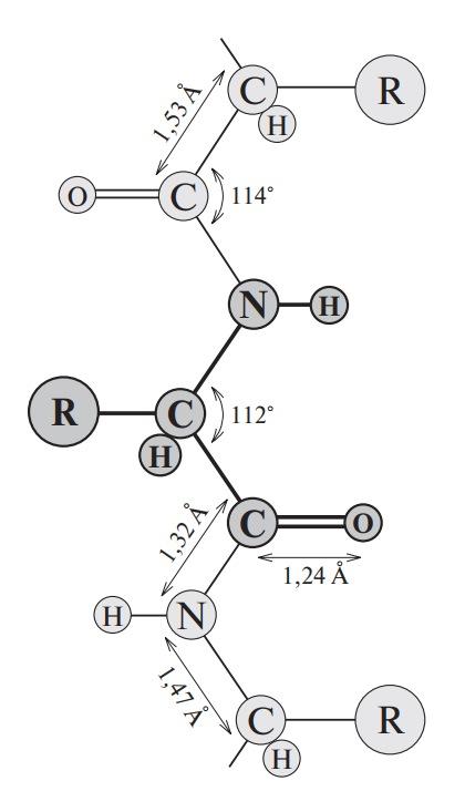 Расстояние и углы между атомами в структуре полипептидной цепи