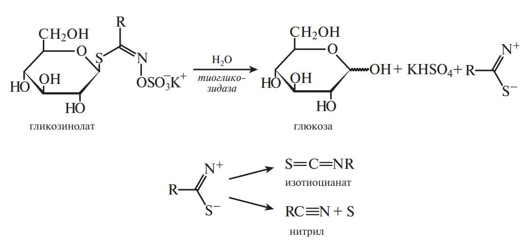 S-гликозид. Разрушение под действием природной тиогликозидазы