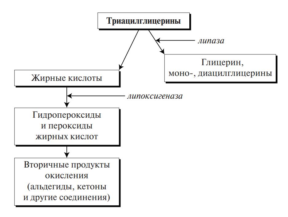 схема ферментативного прогоркания жира