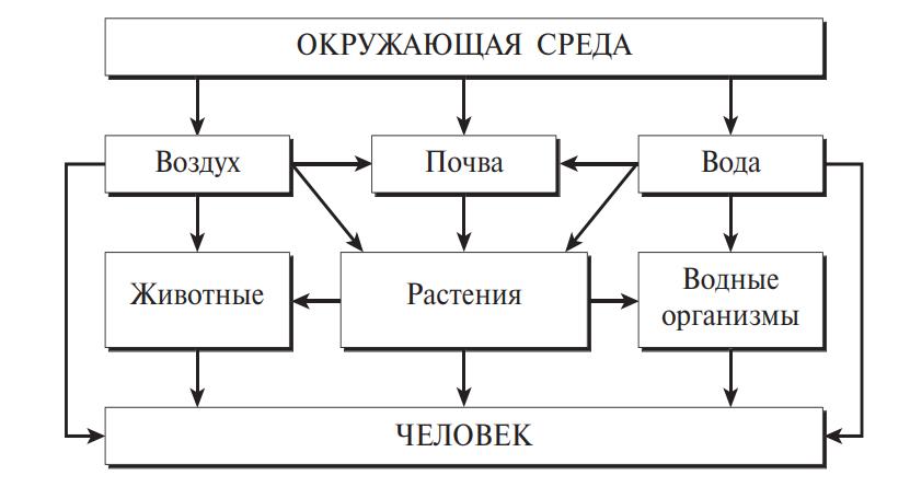 Схема поступления ксенобиотиков из окружающей среды в организм человека по пищевым цепям