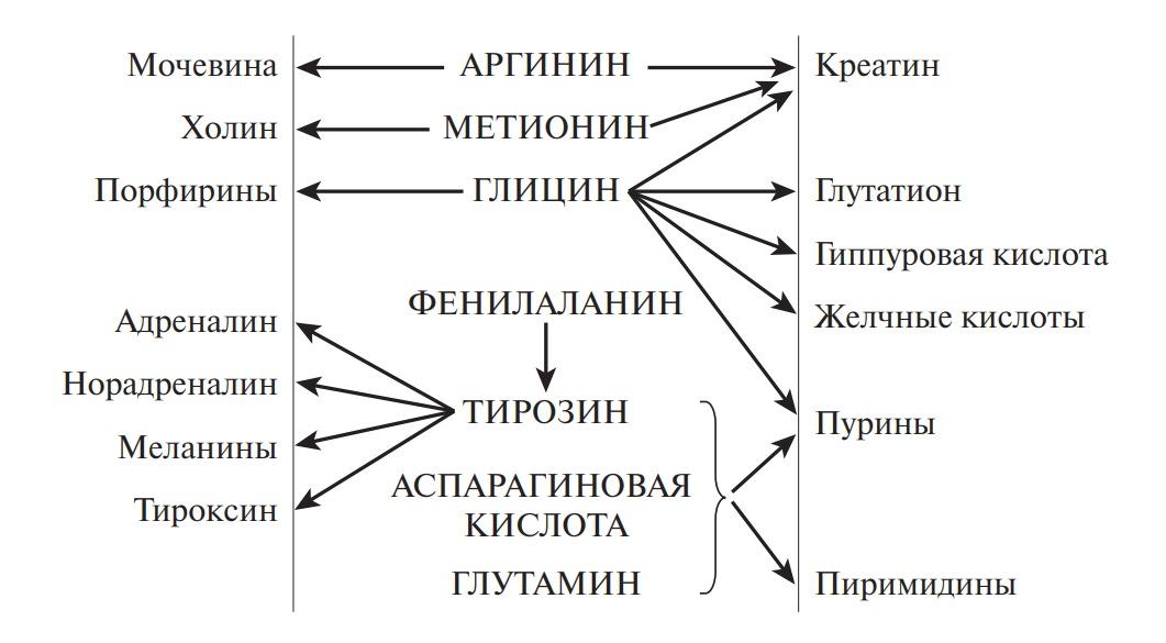 Схема превращения аминокислот