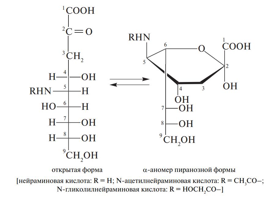 Сиаловые кислоты