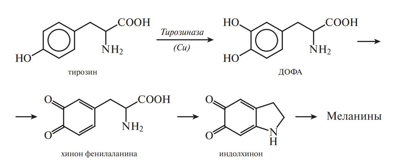 синтез меланинов