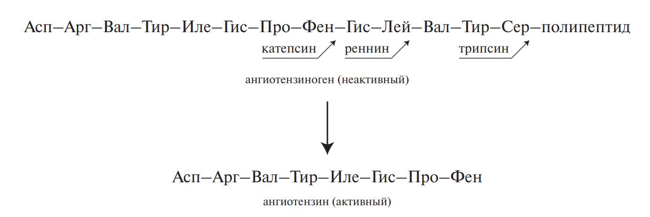 Вазоактивные пептиды