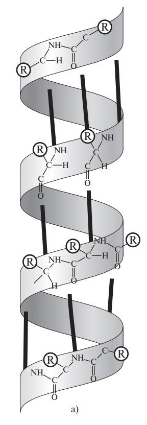 Вторичная структура белков