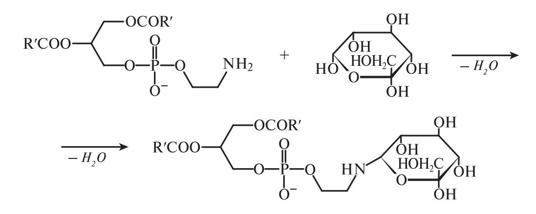 Взаимодействие глицерофосфолипиды–углеводы