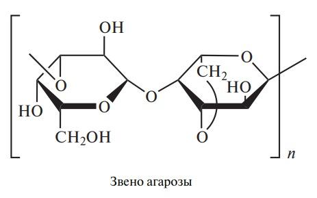 Звено агарозы