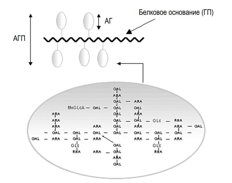 формула смолы акации на молекулярном уровне