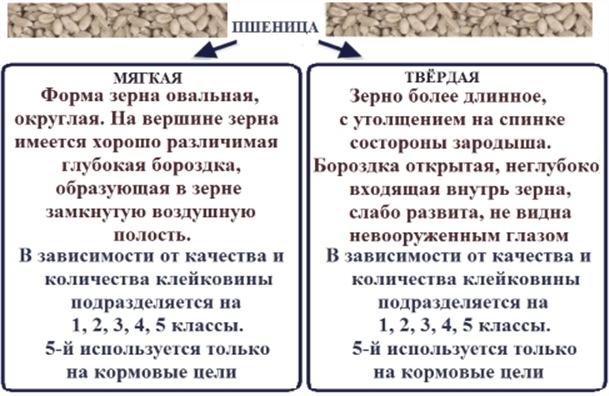 Идентификация вида и класса зерна
