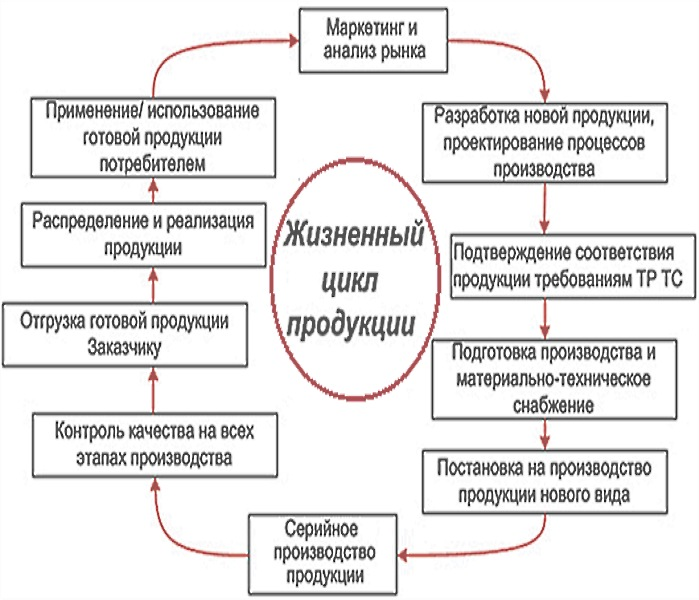 Жизненный цикл продукции